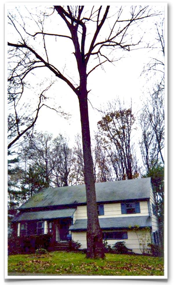 1979-tree